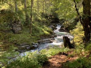 Wald mit Fluss Österreich